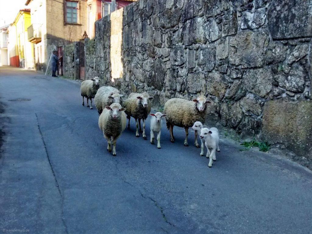 Pilgern für Anfänger | Tag 7 | Caminha bis Valença